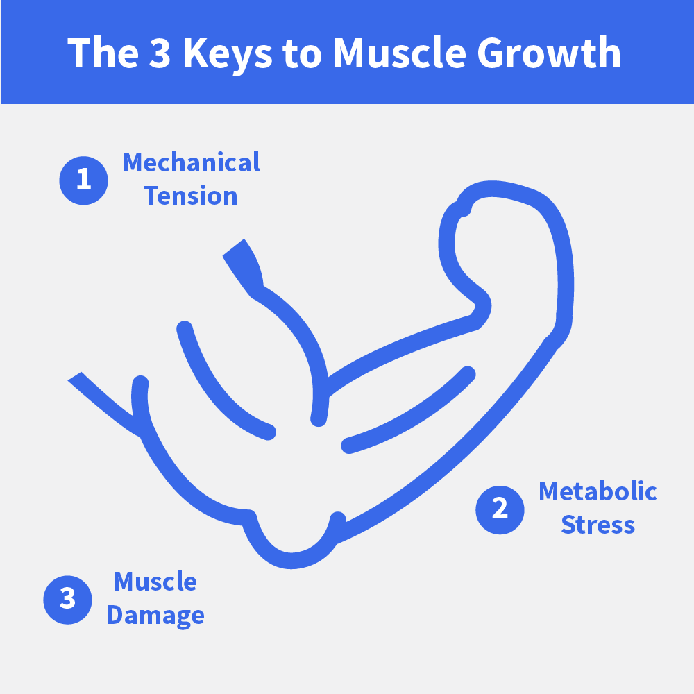 Muscular Hypertrophy: 3 Ways to Make Your Muscles Grow