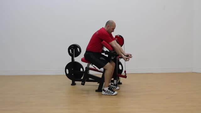 Male Lever Preacher Curl (plate loaded) demonstration