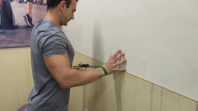 Banded Shoulder Spider Crawls demonstration