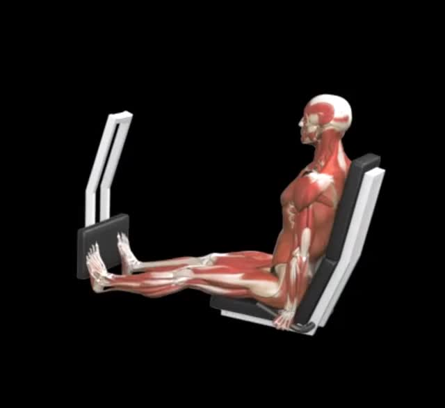 Male Lever Seated Calf Press demonstration