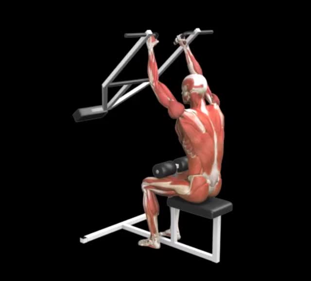 Male Lever Close Grip Pulldown demonstration